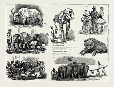 Yak Drawing - Barnums Show At Olympia, Uk, 1889, Featuring A Yak by Litz Collection