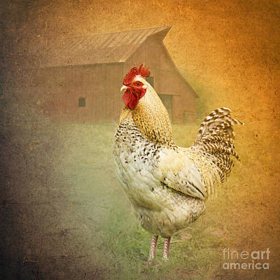Rooster Digital Art - Barnyard Boss by Betty LaRue