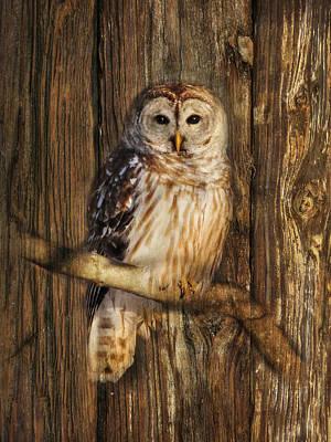 Owl Digital Art - Barred Owl 1 by Lori Deiter