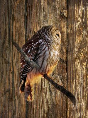 Owl Digital Art - Barred Owl 2 by Lori Deiter