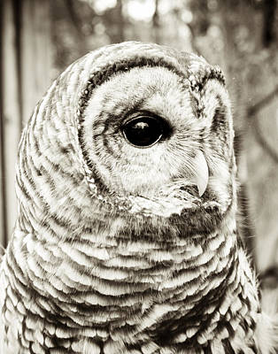 Black And White Bird Photograph - Barred Owl by Joy StClaire
