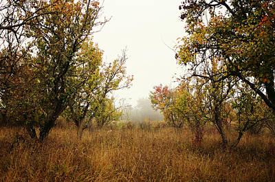 Wild Orchards Digital Art - Barren by Silvia Floarea Toth