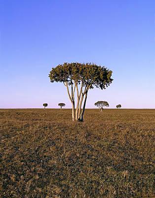 Barren Tree Print by Dreamland Media