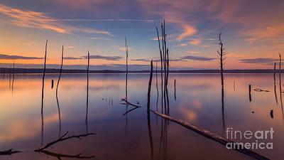 Barren Water Forest 16x9 Crop Original by Michael Ver Sprill