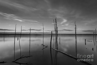 Barren Water Forest Bw Original by Michael Ver Sprill