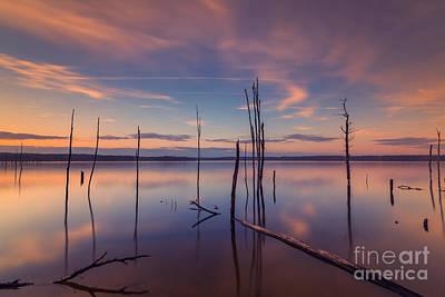 Barren Water Forest  Original by Michael Ver Sprill