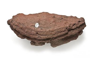 Extrusion Photograph - Basalt Bomb by Natural History Museum, London