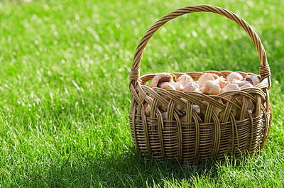 Tasty Photograph - Basket Of Fresh Mushrooms by Michal Bednarek