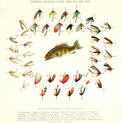 Bass Fishing Flies 1882 Print by Padre Art