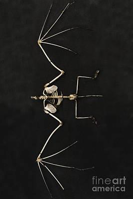Bat Bones Original by Margie Hurwich