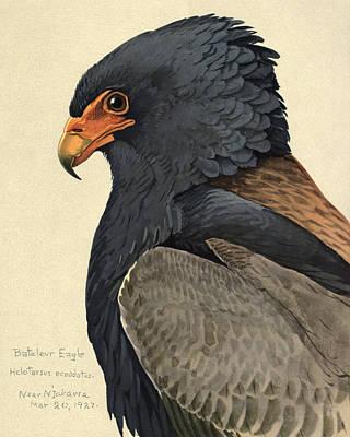Bateleur Eagle Print by Louis Agassiz Fuertes