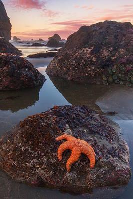 Starfish Photograph - Battle Rock Sunrise by Darren  White