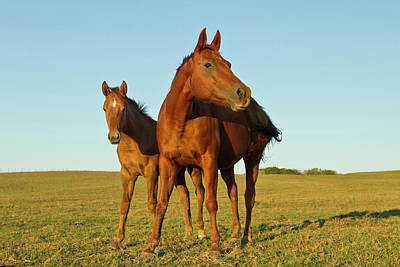 Ditto Photograph - Bay-colored Riding Horses On Ranch by Larry Ditto