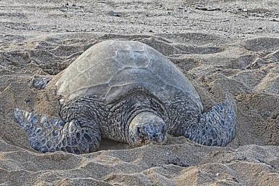 Haleiwa Photograph - Beach Bum by Douglas Barnard