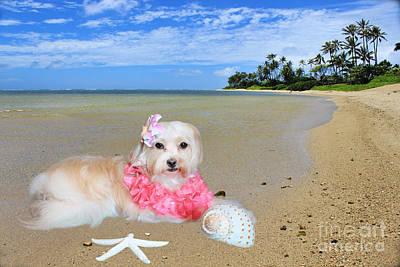 Hawaii Dog Photograph - Beach Girl by Kristine Merc