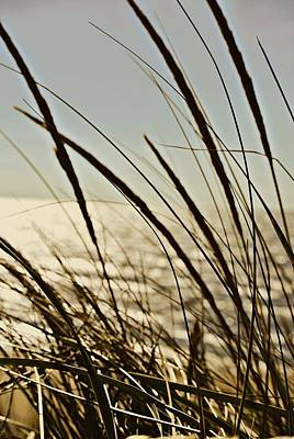 Autumn Photograph - Beach Grazing by Dawdy Imagery