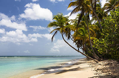 Photograph - Beach Pigeon Point Tobago West Indies by Konrad Wothe