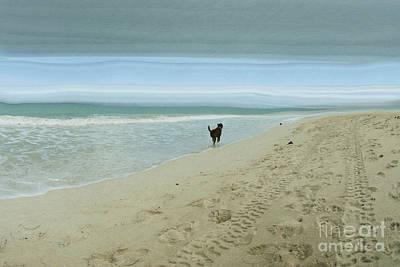 Hawaii Dog Photograph - Beach Run by Juli Scalzi