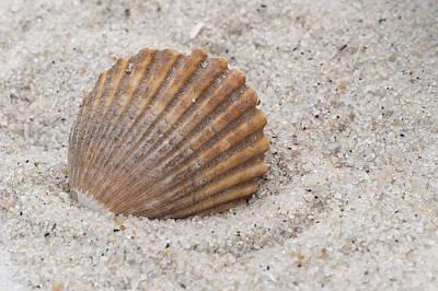 Sun Porch Photograph - Beach Seashell by Terry DeLuco