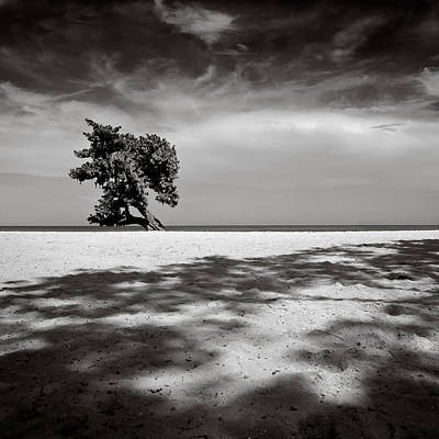 Ideal Photograph - Beach Tree by Dave Bowman