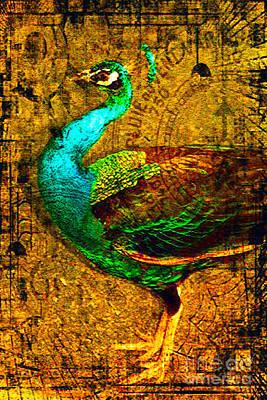 Peacock Photograph - Beacon Hill Peacock by Carole-Ann Ricketts