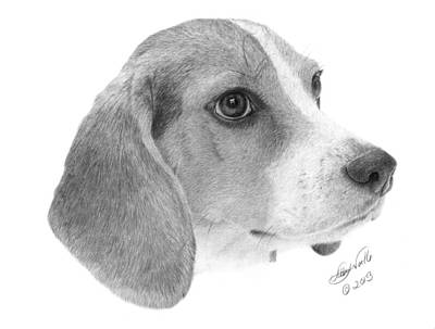 Dog Drawing - Beagle - 007 by Abbey Noelle
