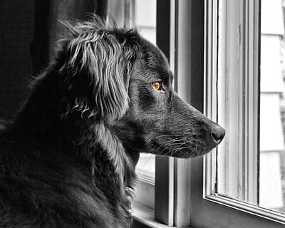 Tim Buisman Photograph - Bear At Window by Tim Buisman