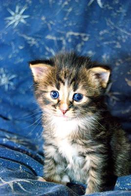 Cat Photograph - Bear Baby Kitten by Laura Strain
