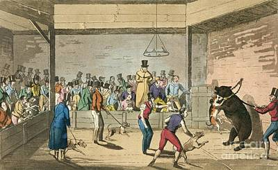 Bear Baiting, 1820s Print by British Library