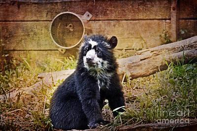 Animal Photograph - Bear Cub by Tom Gari Gallery-Three-Photography