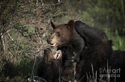 Bear Photograph - Bear Hug by Wildlife Fine Art