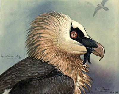 Vulture Painting - Bearded Vulture by Louis Agassiz Fuertes