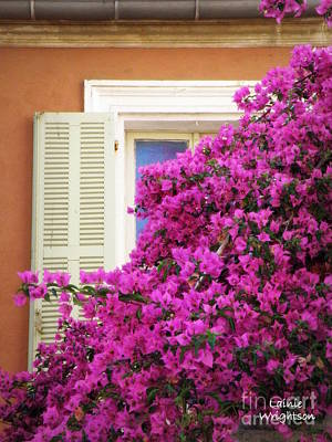 Beaucoup Bougainvillea  Print by Lainie Wrightson