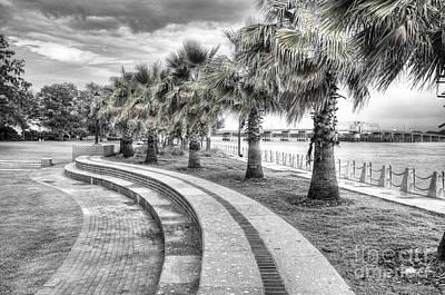 Palmetto Tree Photograph - Beaufort Sc Water Front Park by Scott Hansen
