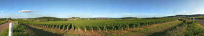 Beaujolais Photograph - Beaujolais Vineyard, Jully-les-buxy by Panoramic Images