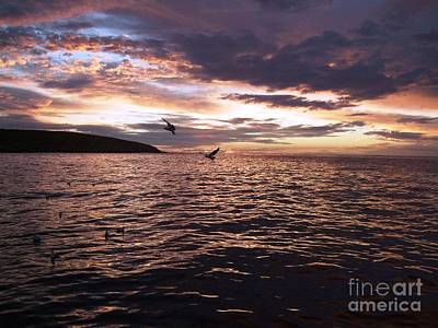 Rodney Fox Photograph - Beautiful Above Sharks Lurk Below by Crystal Beckmann