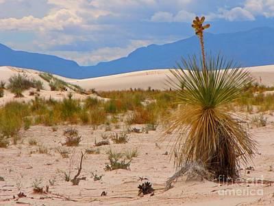 Beautiful Desert Original by John Malone
