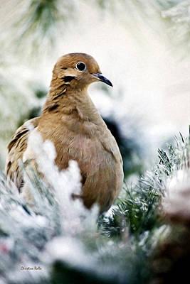 Dove Digital Art - Beautiful Dove by Christina Rollo