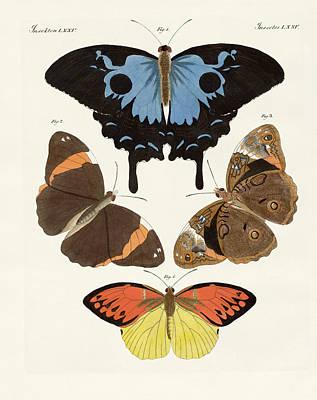 Blue Swallowtail Drawing - Beautiful Foreign Butterflies by Splendid Art Prints