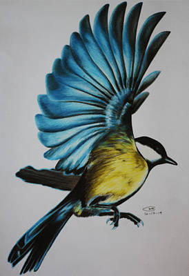 Chickadee Drawing - Beautiful Landing by Mitchell Ryan