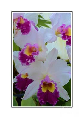 Beautiful Orchids Print by Kathleen Struckle