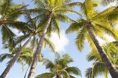 Beautiful Palms Print by Brandon Tabiolo