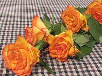Photograph - Beautiful Rose. by Joyce Woodhouse