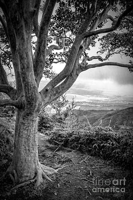 Hawaii Photograph - Beautiful Tree Looking Down On A Tropical Valley by Edward Fielding