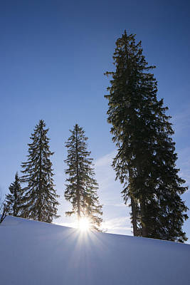 Beautiful Trees On A Sunny Winter Day Print by Matthias Hauser