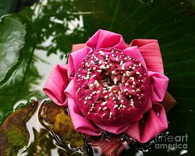 Pink Photograph - Beautifully Bizarre by Scott Cameron