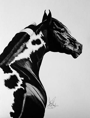 Pinto Drawing - Beauty In Paint Horses by Cheryl Poland