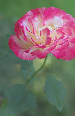 Hearts Photograph - Beauty In The Garden by  The Art Of Marilyn Ridoutt-Greene