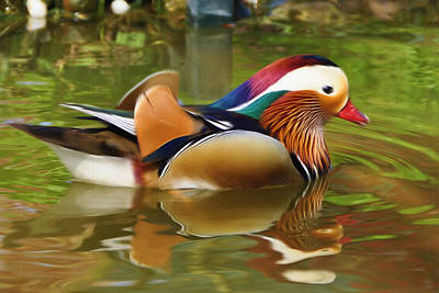Wood Duck Painting - Beauty In The Pond by Ayse Deniz