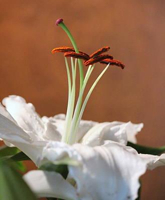 Beauty Of A Lily Print by Rosanne Jordan